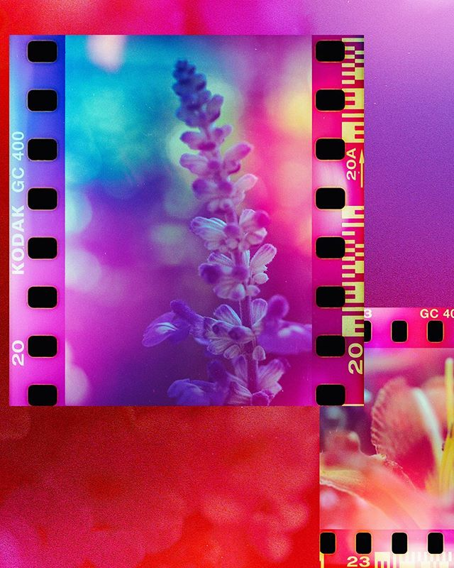 Found my grandpa's old macro lens he used to take photos of teeth with... @psychedelic_blues_film - batch #3 .  #minoltasrt101 #psychedelicbluesfilm #lensculture #macrophotography #somewheremagazine #solarcollective #filmwave #dazedandexposed #filmphotomag #indo35mm #photofilmy #verybusymag #37minus #portbox