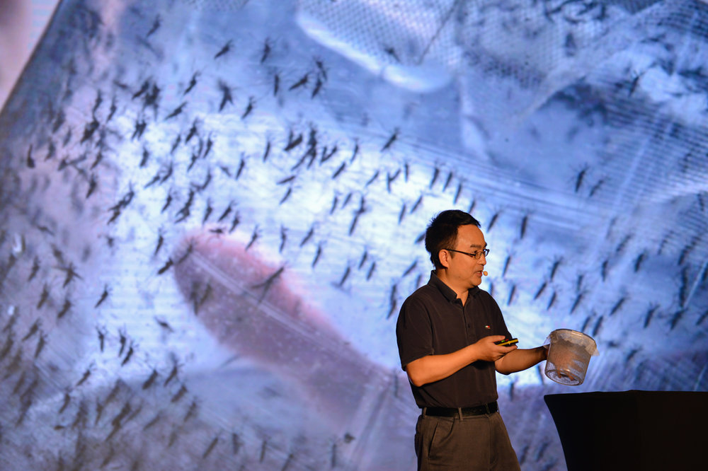 Zhiyong Xi:  The scientists who raise mosquitos to fight zika - People hate mosquitos don't they, do you know there are scientists actually raising mosquitos and releasing them into cities? This is exactly what Professor Zhiyong Xi and his team have been doing. By successfully put Wolbachia, a kind of bacteria, onto Asian Tiger Mosquito, the main carrier of Dengue Fever and Zika virus, eliminating their ability of reproduction. This method has a less environmental effect than using pesticides and has been since shared with the world and IAEA.