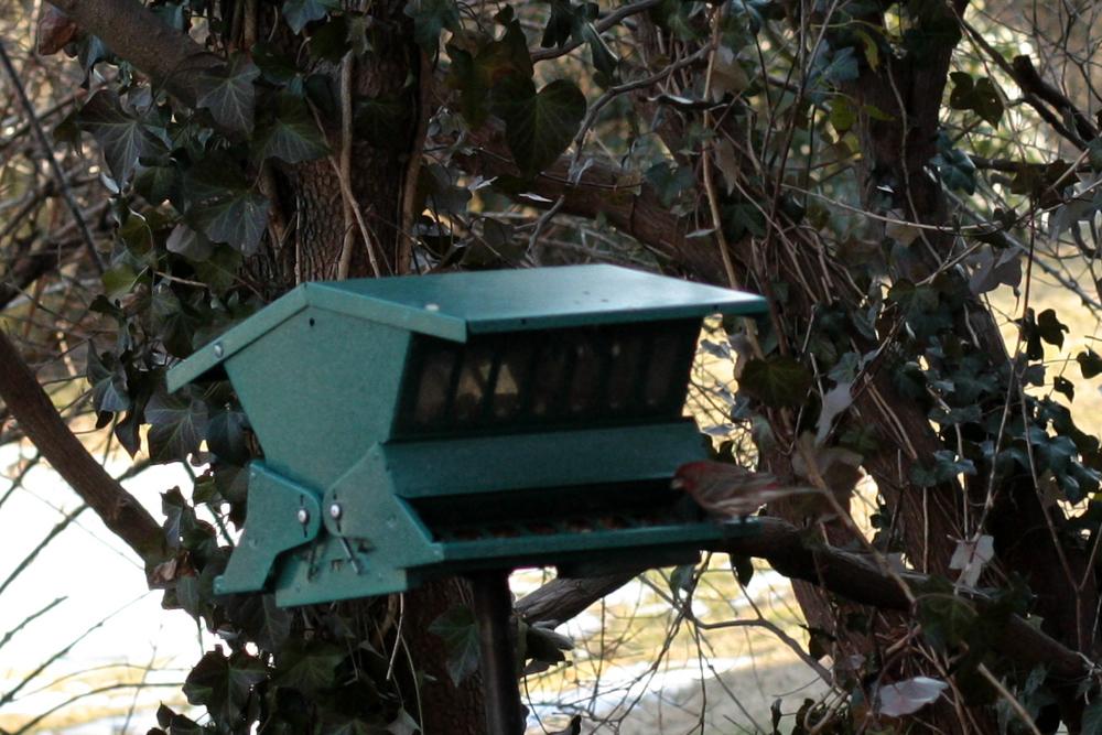 Bird For Blog.jpg
