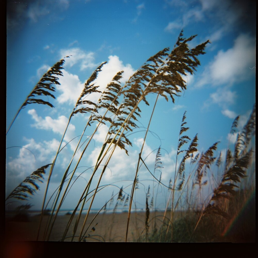 Dune Grass, early morning, St. Augustine Beach. Kodak Portra 100