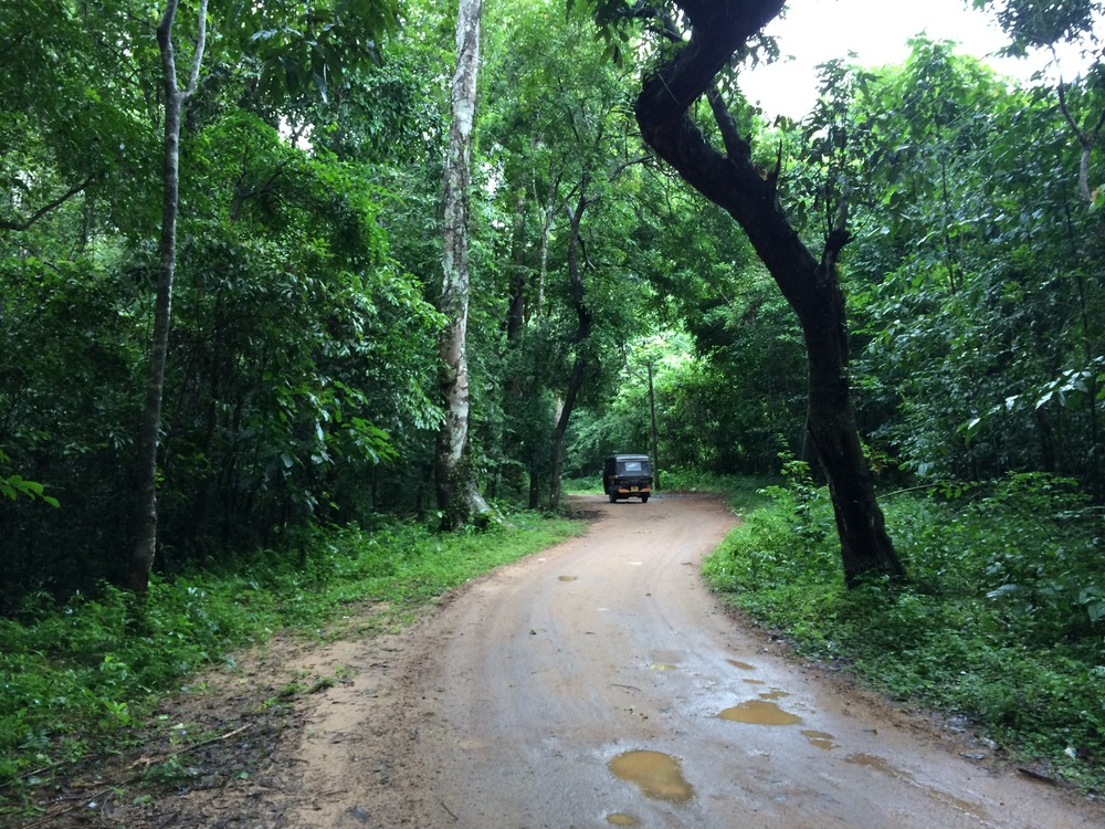 The roads and forest areas surrounding the sanctuary.