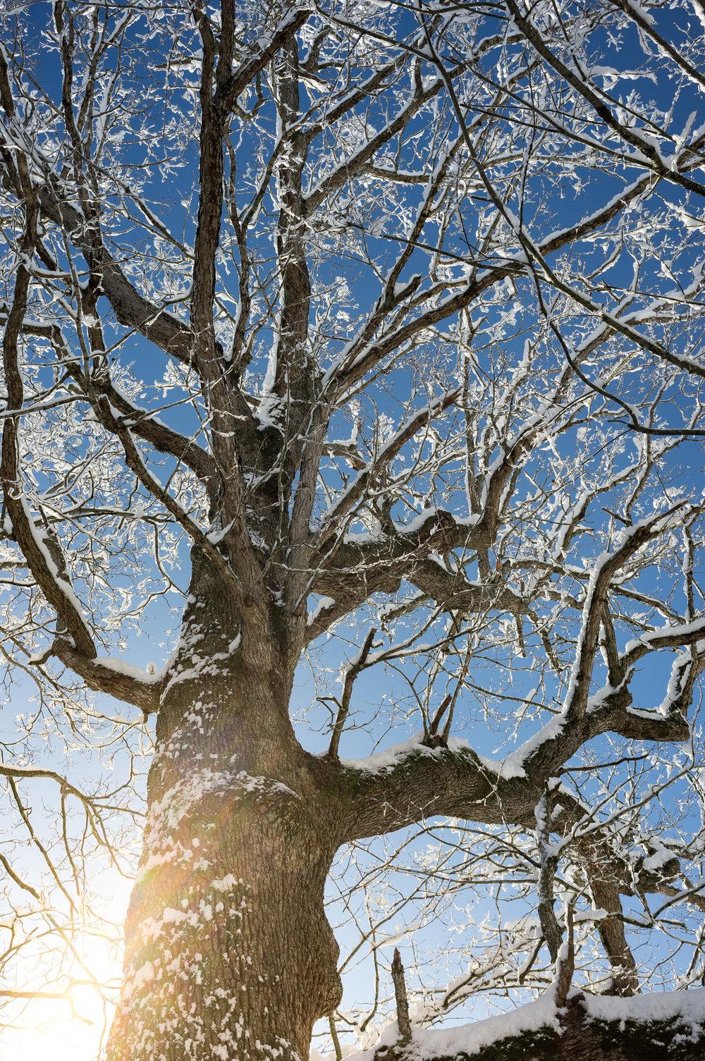 Snow (3 of 7).jpg