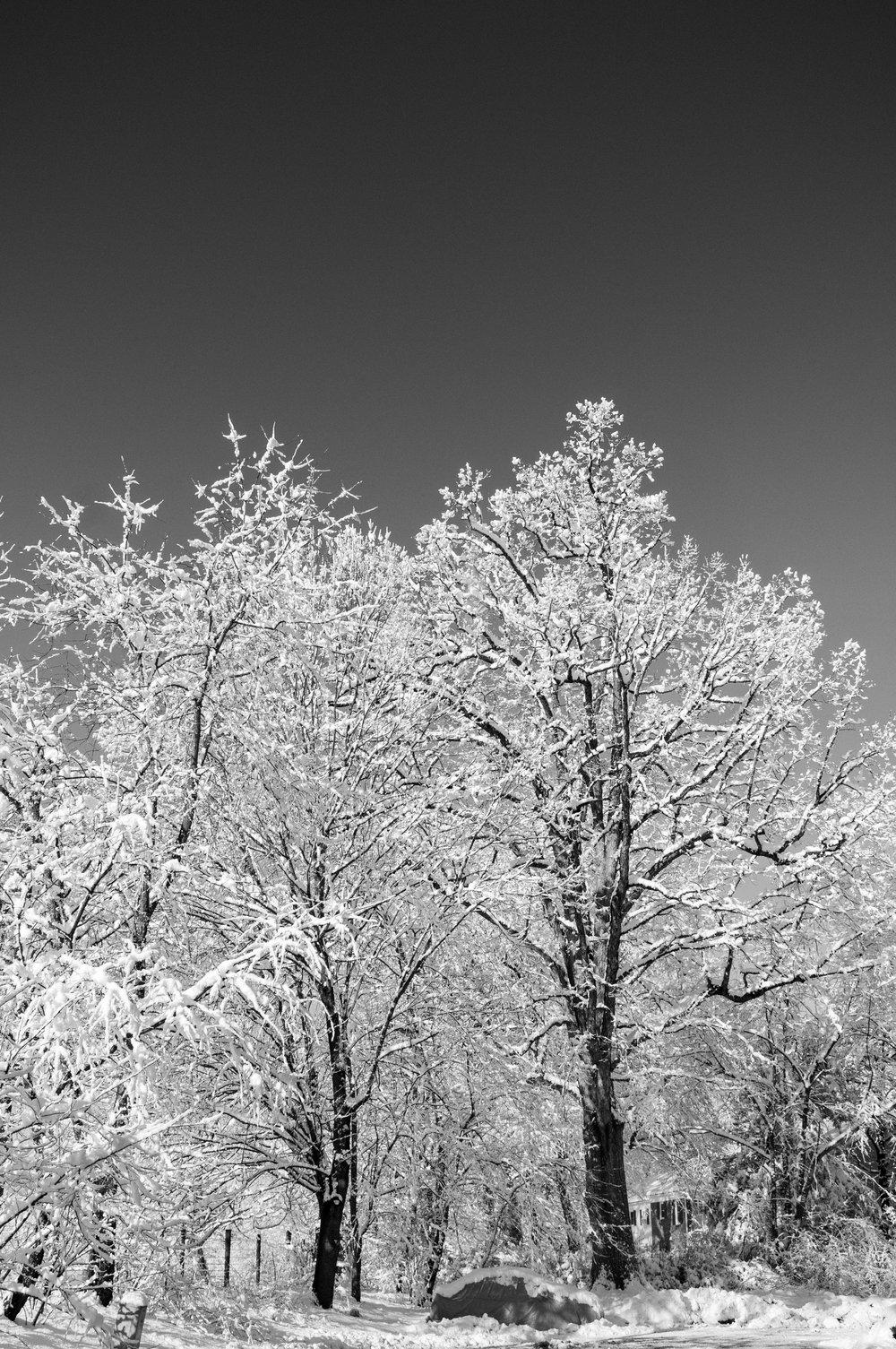 Snow (4 of 7).jpg