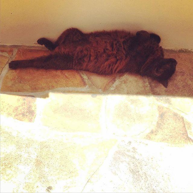 Hot day #cat  #catsofinstagram #summer #catoftheday