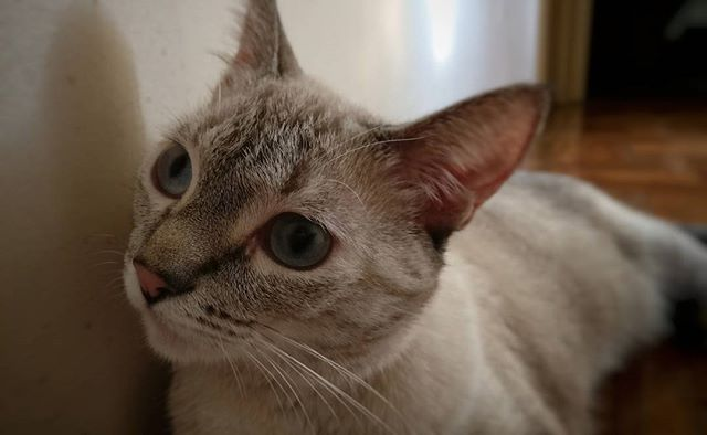 #instacats #cats