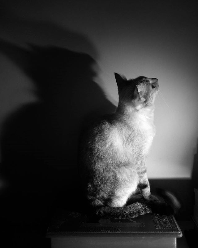#cats #catsofinstagram #instacats