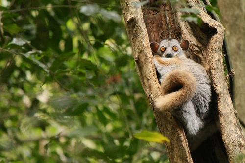 Madagascar Robb Rutledge