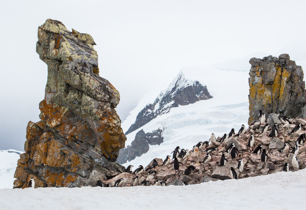 Chinstrap penguin colony on Half Moon Island, South Shetland Islands.