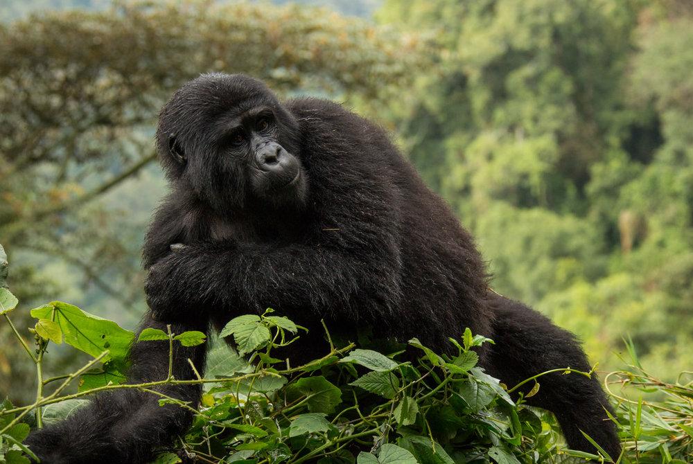 20140821-Uganda-2458.jpg