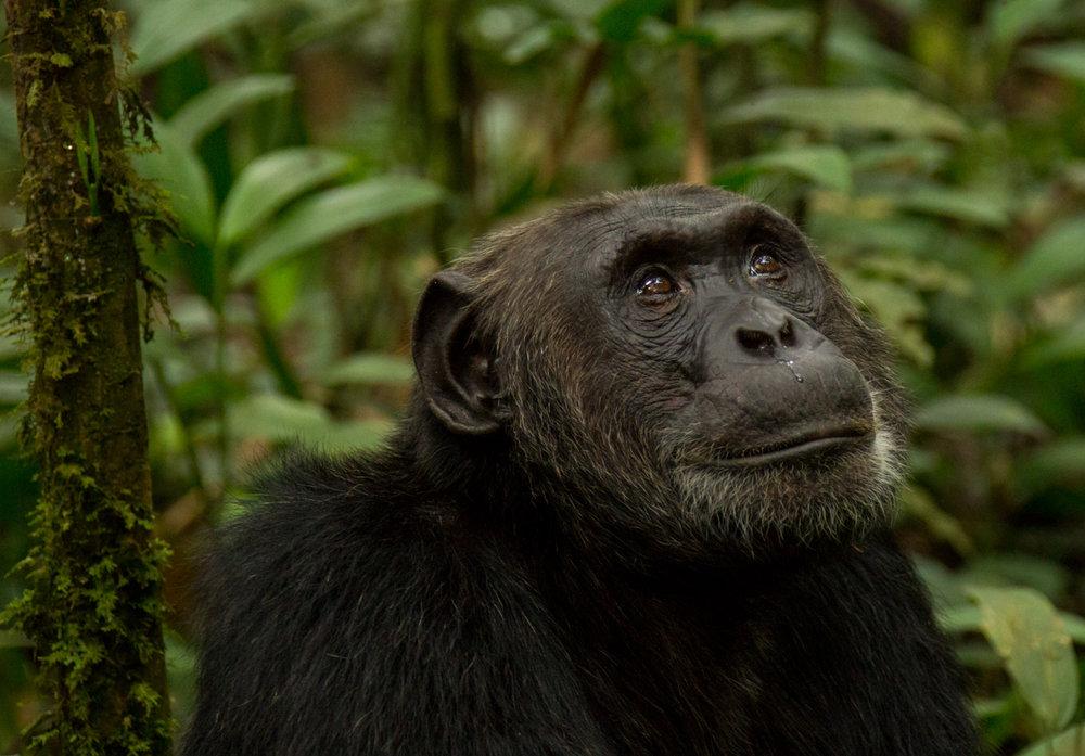 20140818-Uganda-1299.jpg