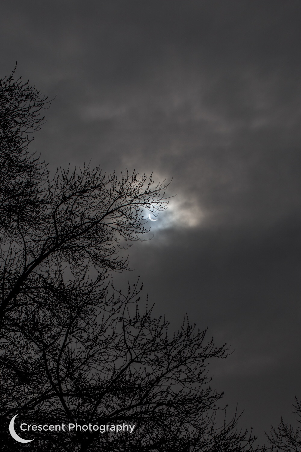 Eclipse through the trees