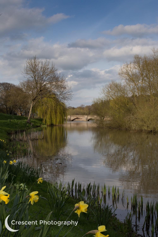 Bridge and daffodils