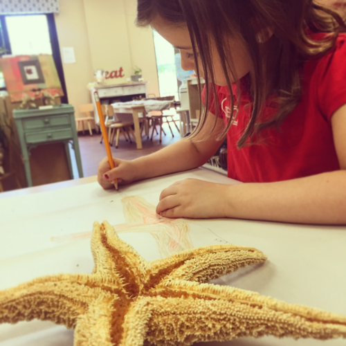 Studying parts of the starfish, dreaming of the ocean!