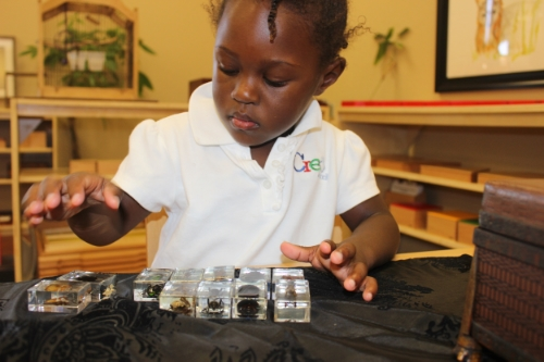 Identifying insects and arachnids