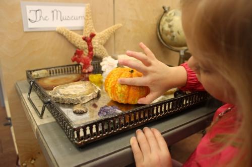 Examining a pumpkin at the Museum Table
