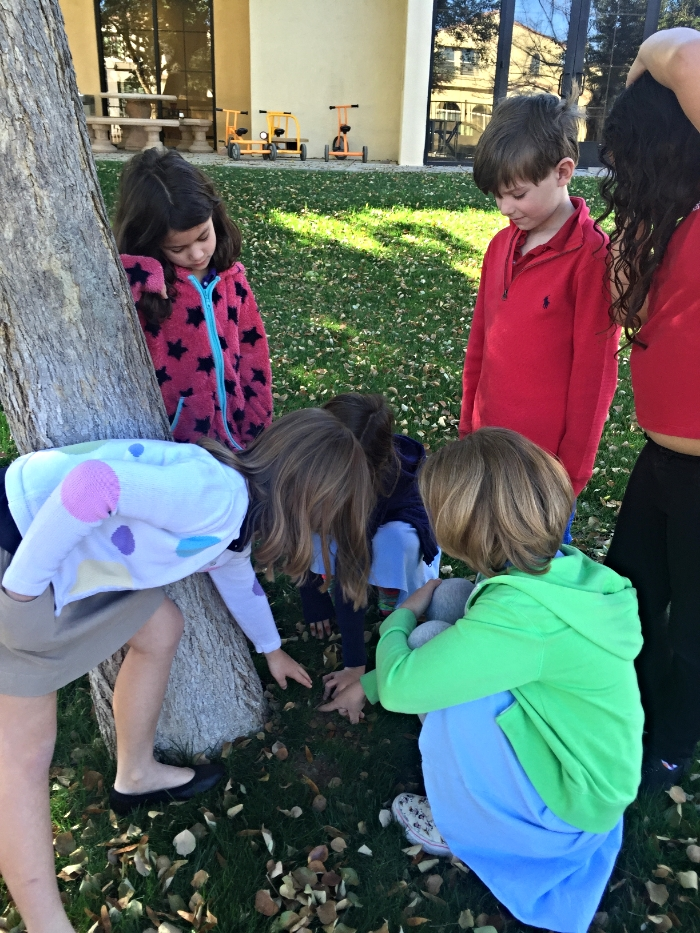 This group is trying to figure out which the roots are moving