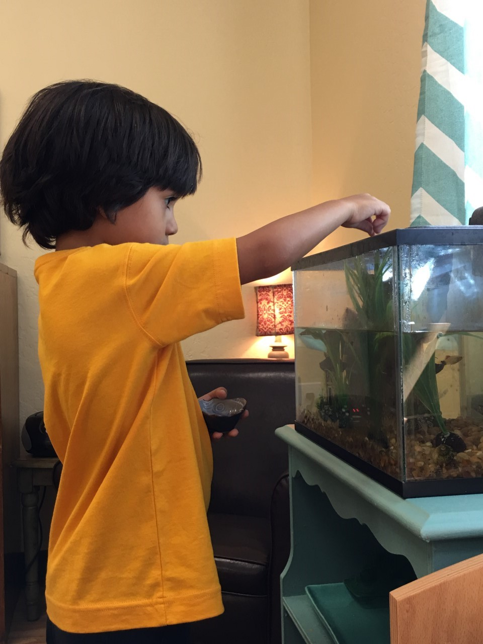Feeding the classroom fish