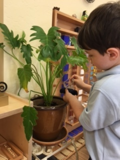 Caring for the classroom plants