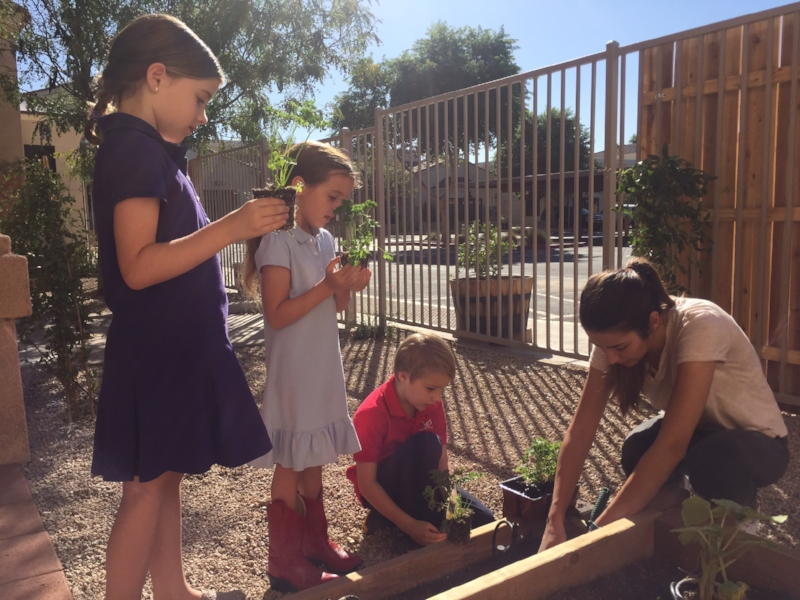 After the lesson on parts of a plant and needs of a plant, the children are beginning to see plants and flowers in a new light as we beautify our outdoor environment.