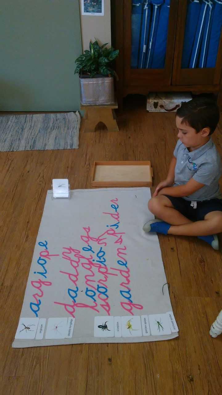 3 Part Cards and the Movable Alphabet