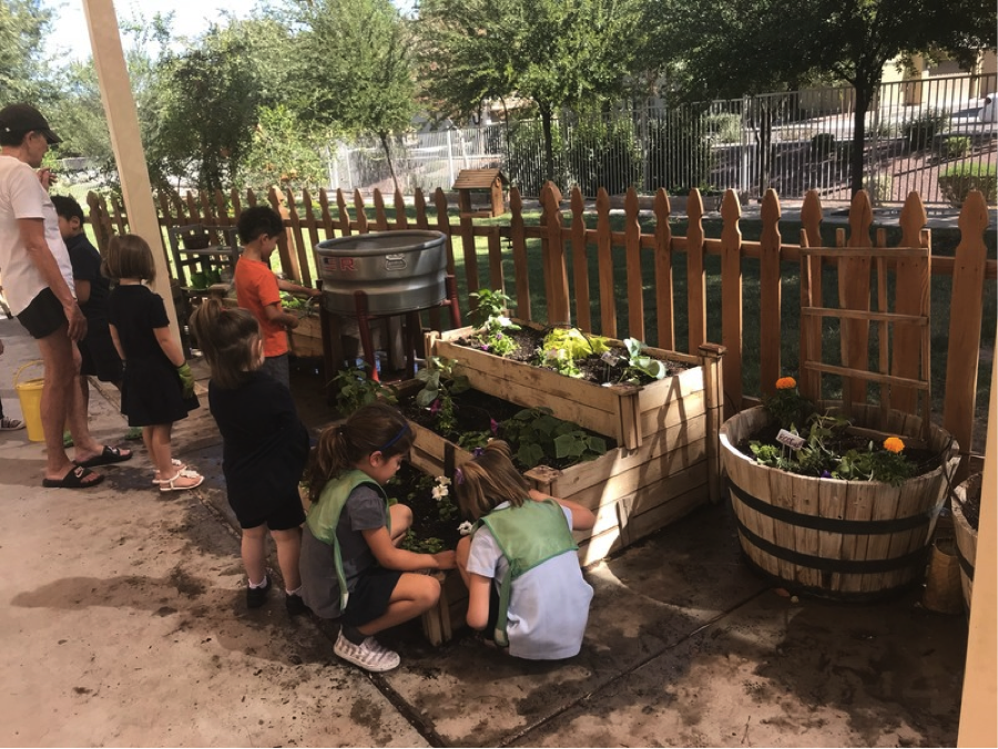 Caring for the Garden