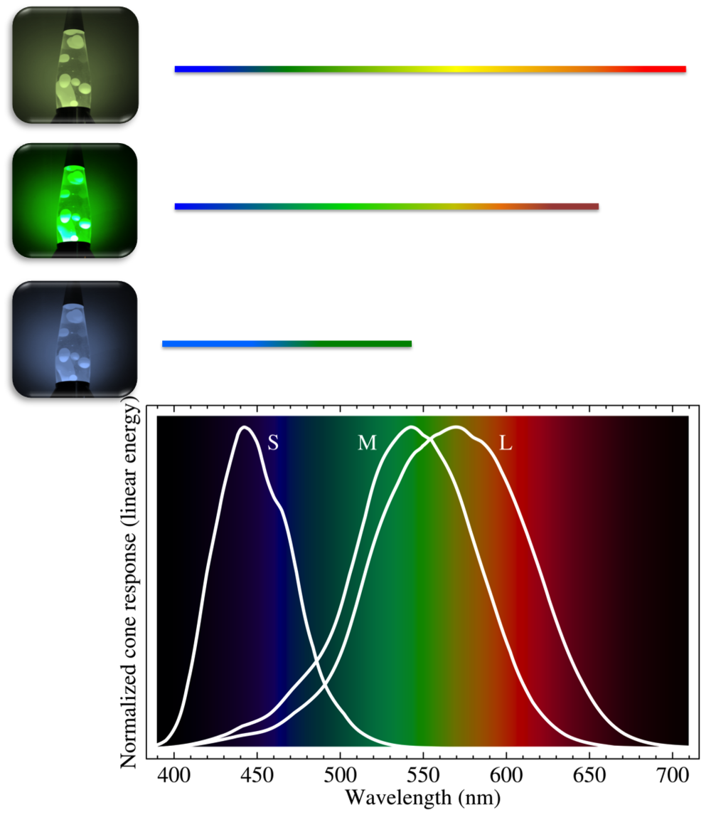 Cone cells and their encased pigments can be imagined as tiny lava lamps.  Graph source:  https://commons.wikimedia.org/wiki/File:Cone-fundamentals-with-srgb-spectrum.sv