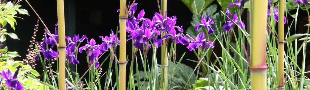 iris-and-bamboo