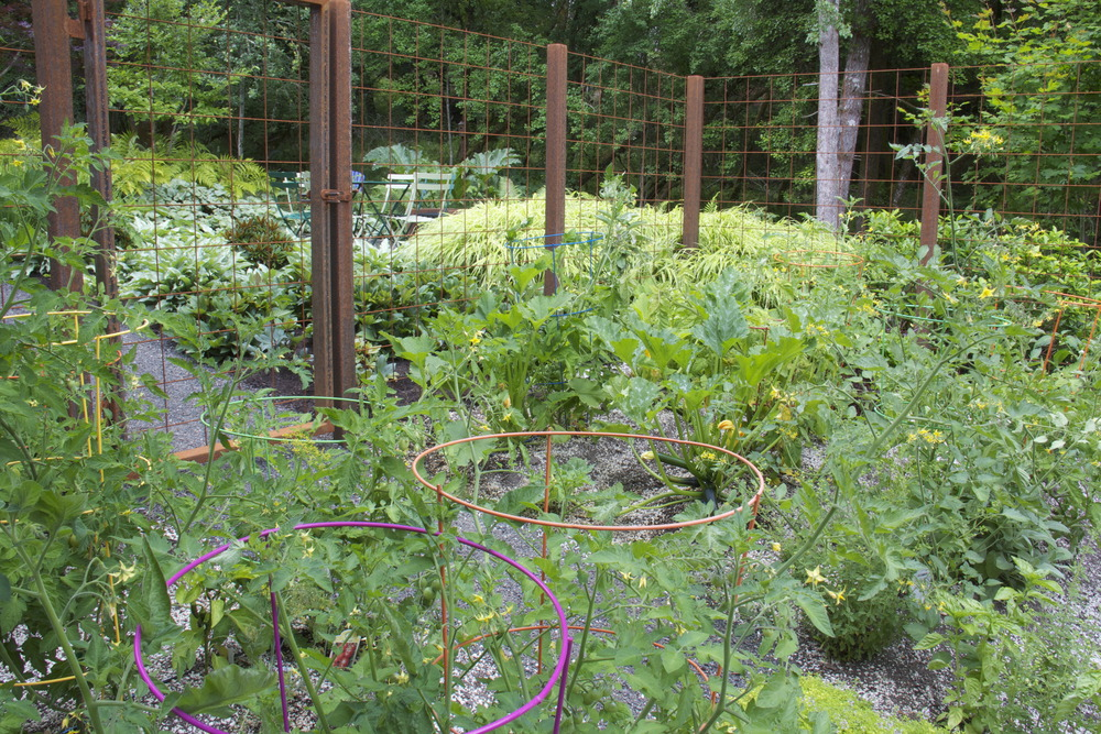 A rusting steel fence is a quiet, elegant way to protect vegetables from deer.