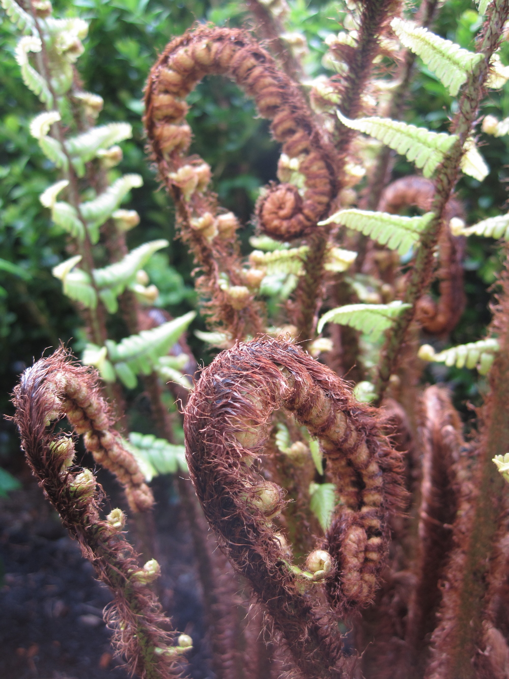 "When we asked for your favorite spring plants, many of you answered ""ferns!""  Subtle, but dramatic.  You guys have great taste."