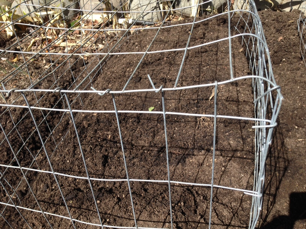 "The end of our wire veggie cages.  Note the ""loose ends"" of the end panel wrapped around the main panel."