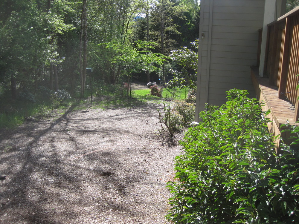 Before: a true blank slate, this empty yard lacked form, focus and screening.