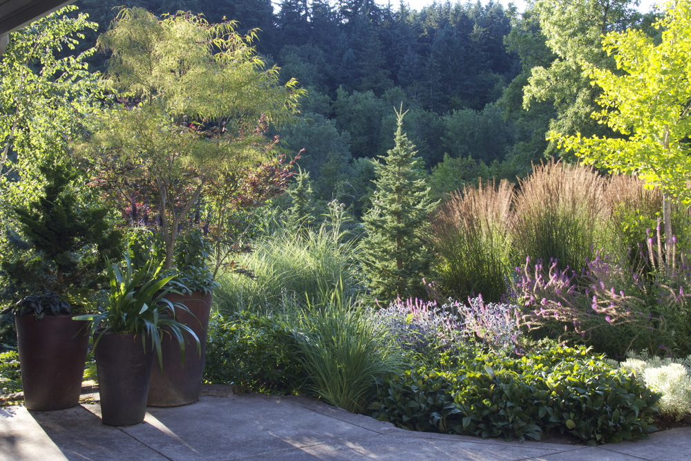 After: plantings with varied height, texture and color embrace the entry and lead the eye into the borrowed view of the hills beyond.