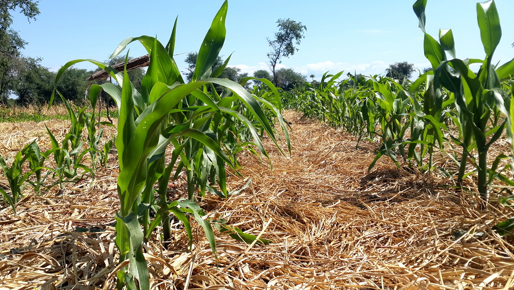 C12 Climate smart agriculture mapping malawi