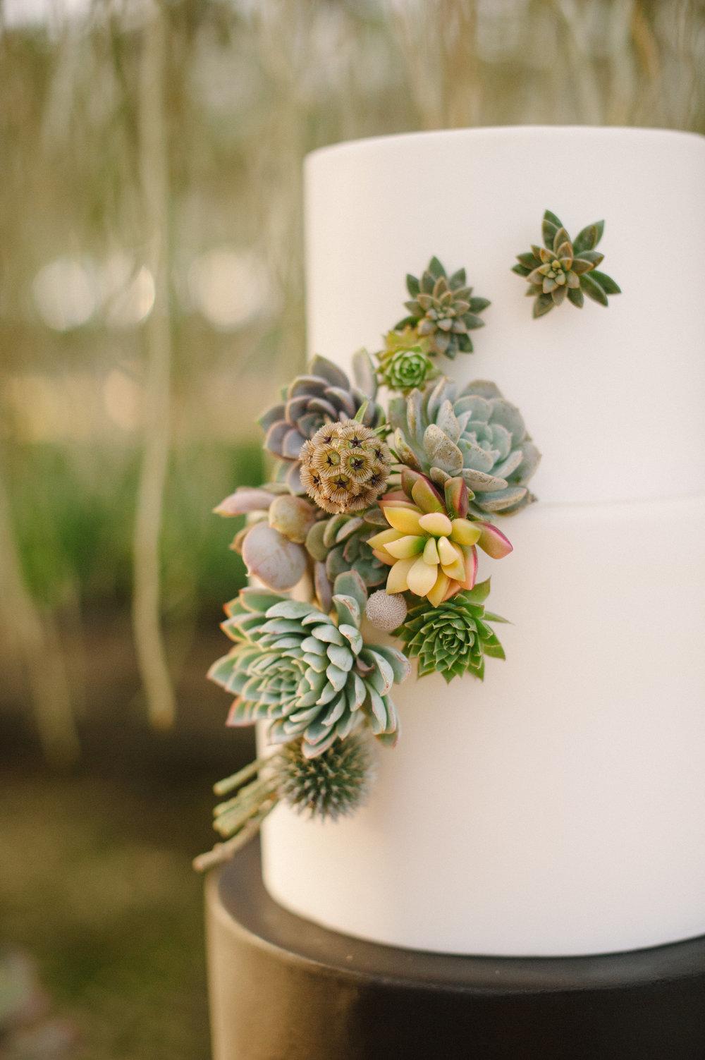 succulentshoot-0205.jpg