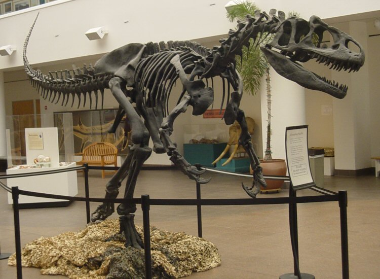 This is not a troglodyte. It's an Allosaurus.  Source: Wikimedia Commons; public domain