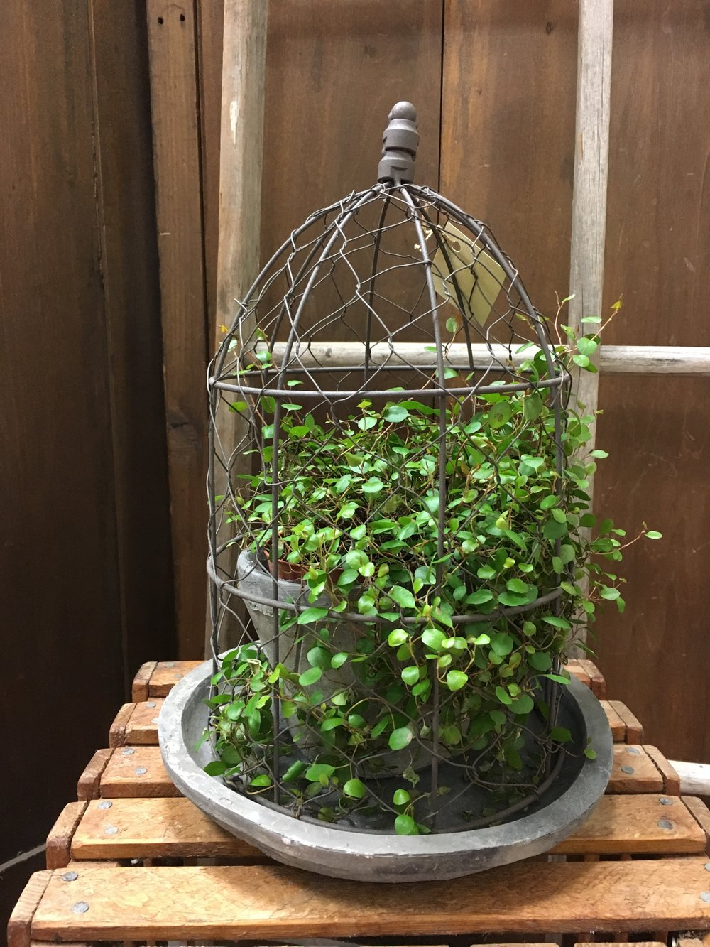 Caged Vine