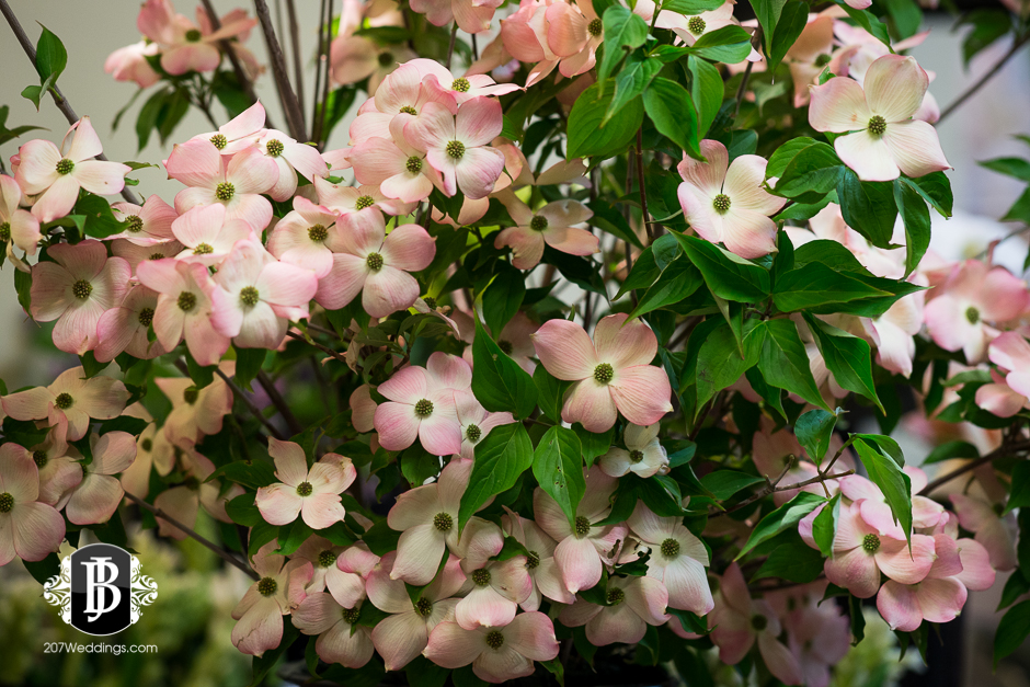 jardiniere-florist-maine-wedding-photographers-6.jpg