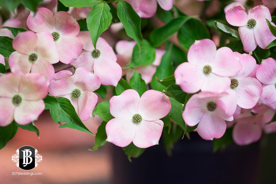 jardiniere-florist-maine-wedding-photographers-8.jpg