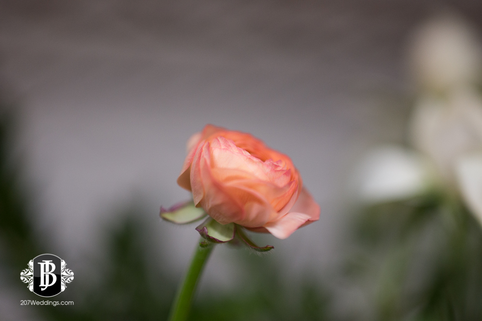 jardiniere-florist-maine-wedding-photographers-19.jpg