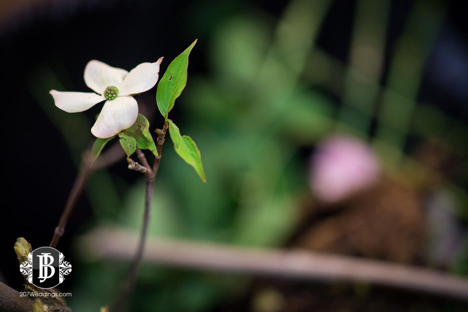 jardiniere-florist-maine-wedding-photographers-30.jpg