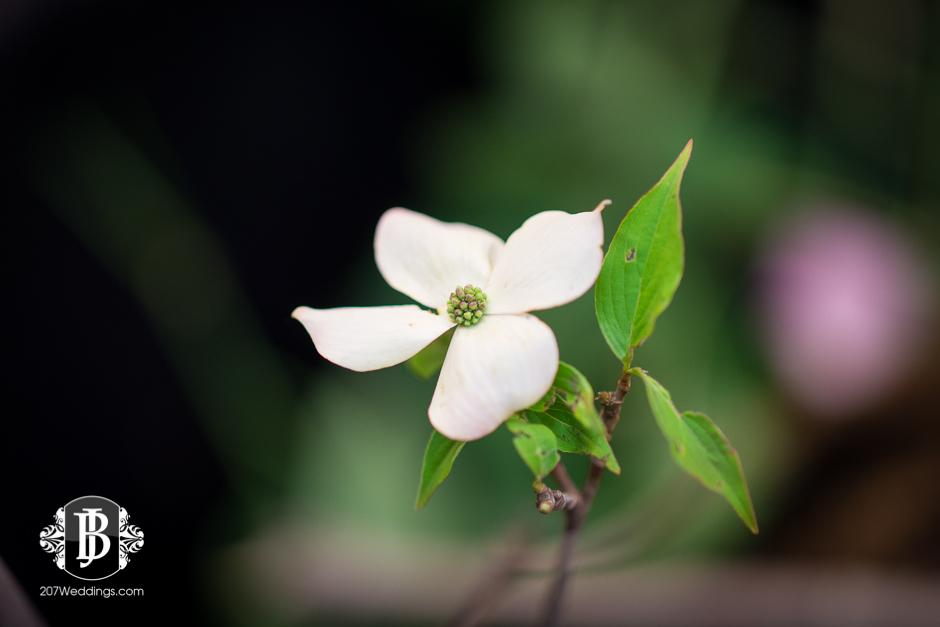 jardiniere-florist-maine-wedding-photographers-31.jpg