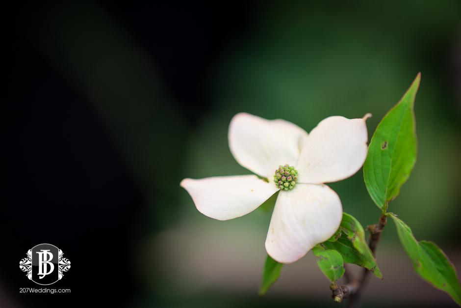 jardiniere-florist-maine-wedding-photographers-32.jpg