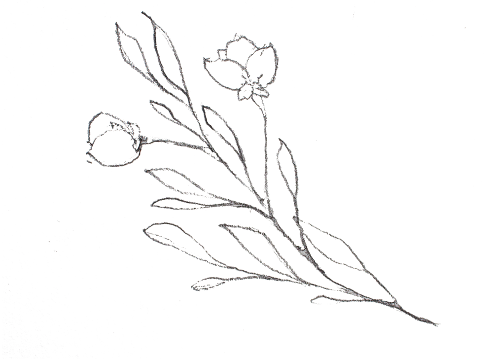 floral-sketch-01 - Copy-web.png