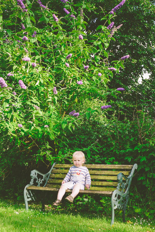 Tommy and the Buddleia