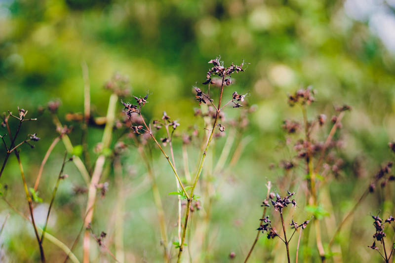 16. How Does Your Garden Grow? Early Autumn