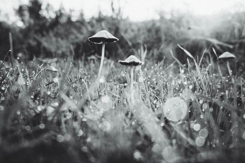 18. How Does Your Garden Grow - November