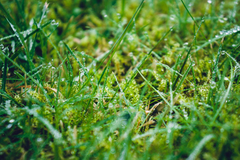 Delicate dewy grass and moss