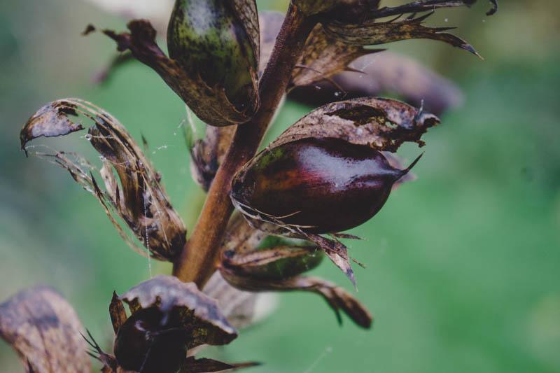 Mega seed pods