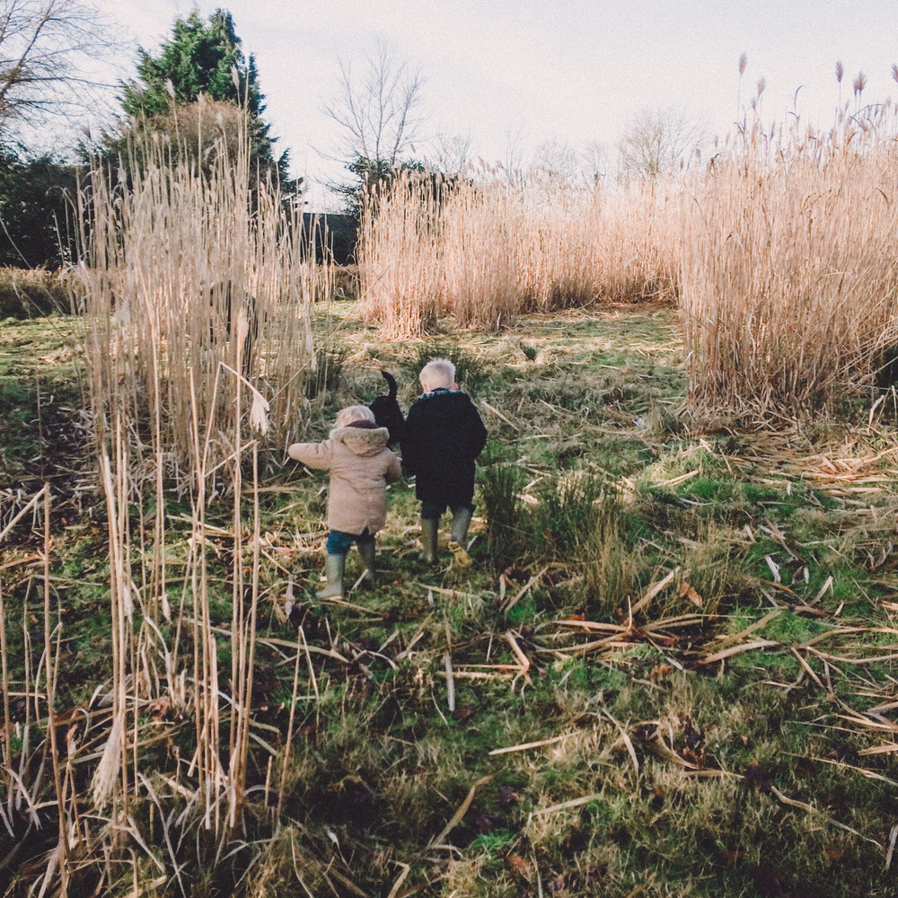 Exploring in the Miscanthus