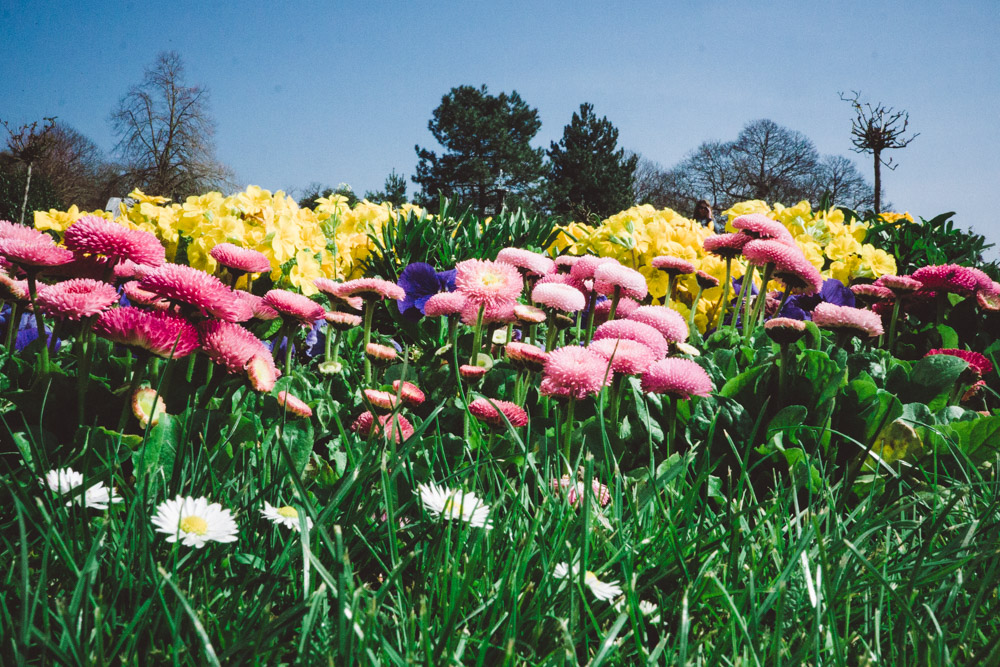 Spring colour at Hestercombe Gardens